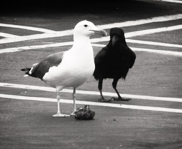Said The Crow To The Sea Gull