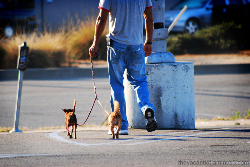 Real Men Have Small Dogs