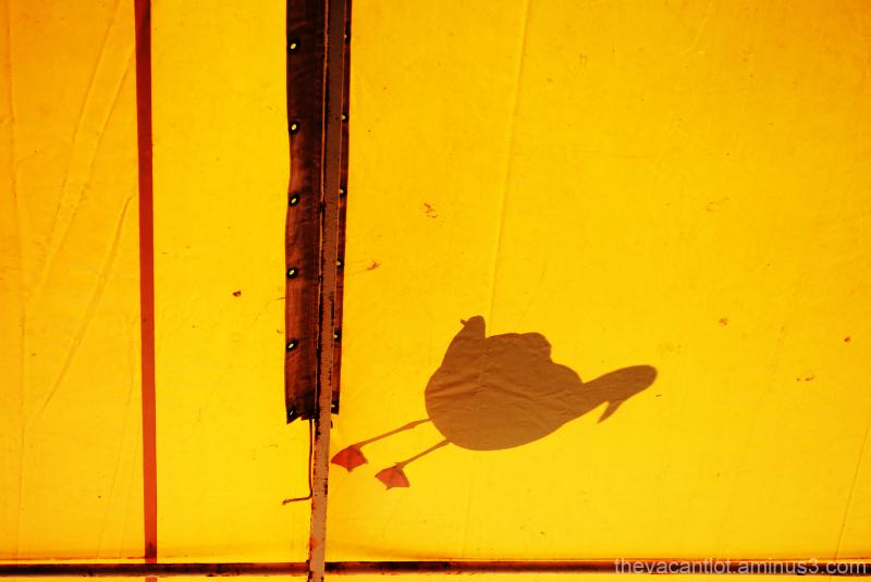 Shadow Of My Former Self