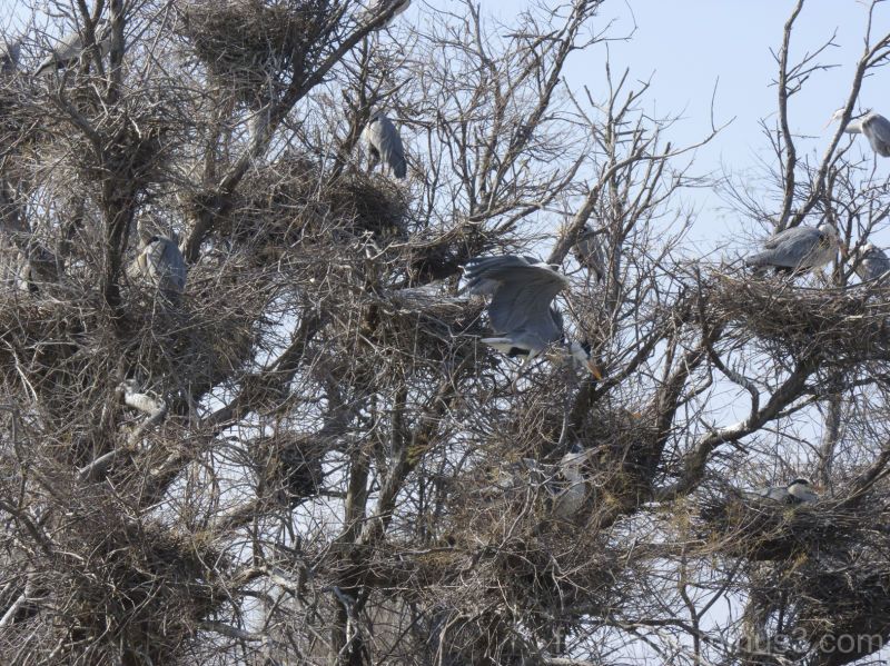 l arbre aux oiseaux (grues)