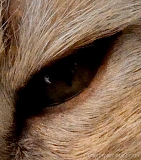 l'oeil de momo