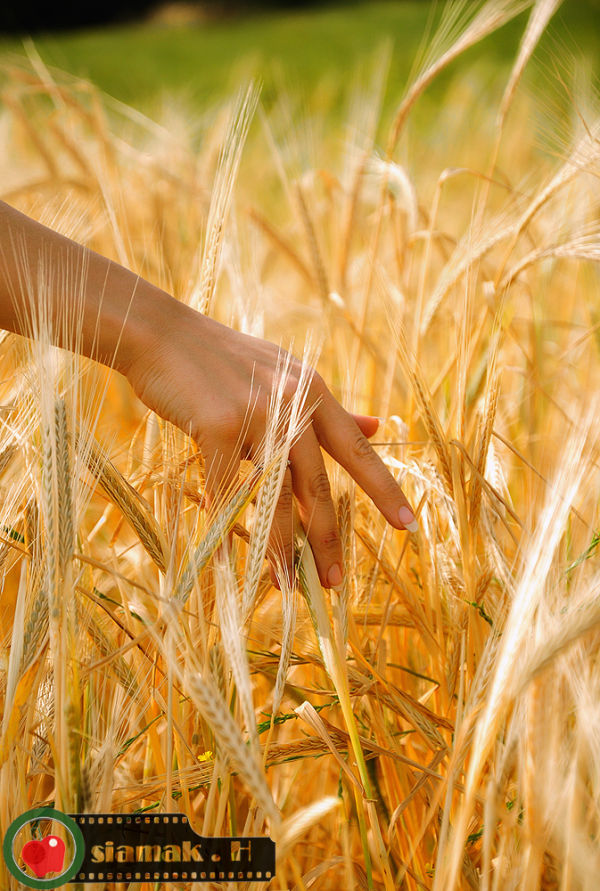 hand , wheat , calm