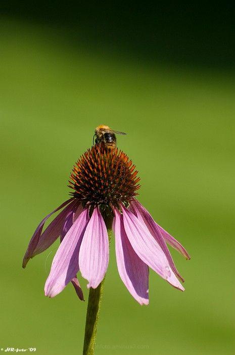 Flower, bloem, macro, Nikon-D40, Ralph