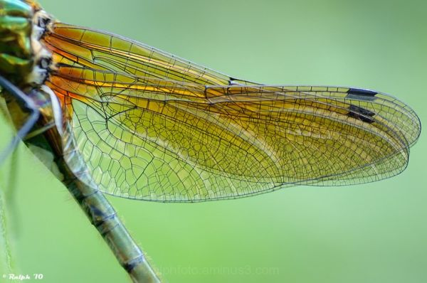 Smaragdlibel, macro, tamron, Nikon, detail