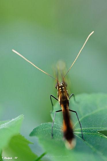 vlinder,butterfly,macro,90mm,tamron,Nikon,