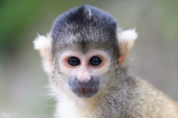 aap,nikon,D90,tamron,monkey,eyes