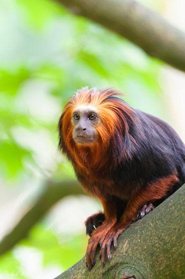 aap nikon d90  monkey