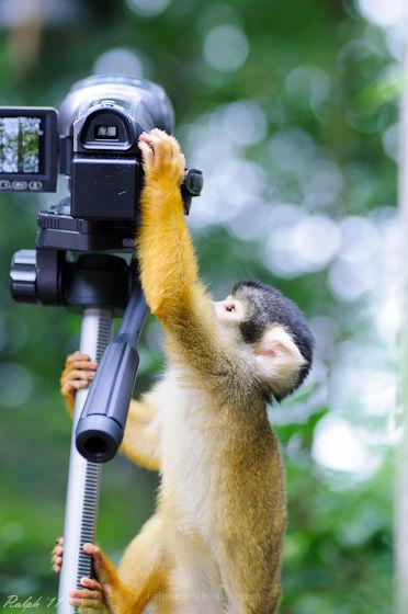 aap nikon d90 tamron monkey