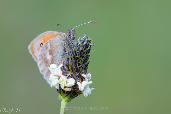 butterfly,vlinder,nikon,D90,macro