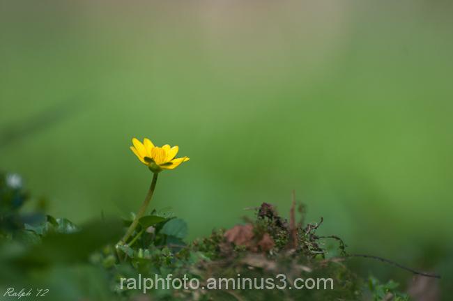 speenkruid nikon tamron macro flower bloem