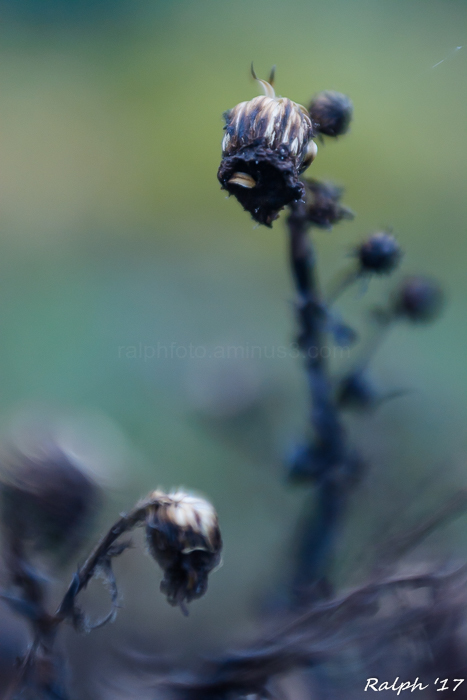 (winter) Flower