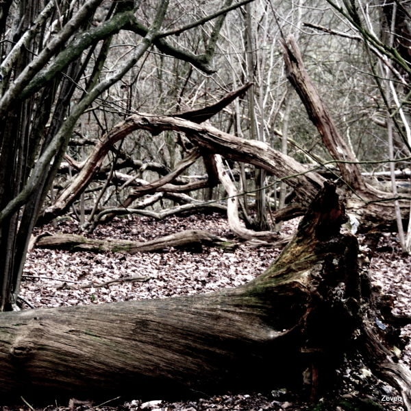 The King's Wood (2)