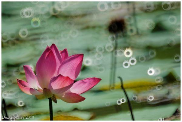 Lotus #7 - F.A.R