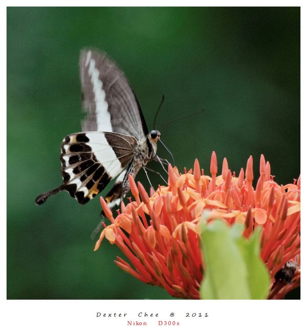 ~ Insect Series #5 ~