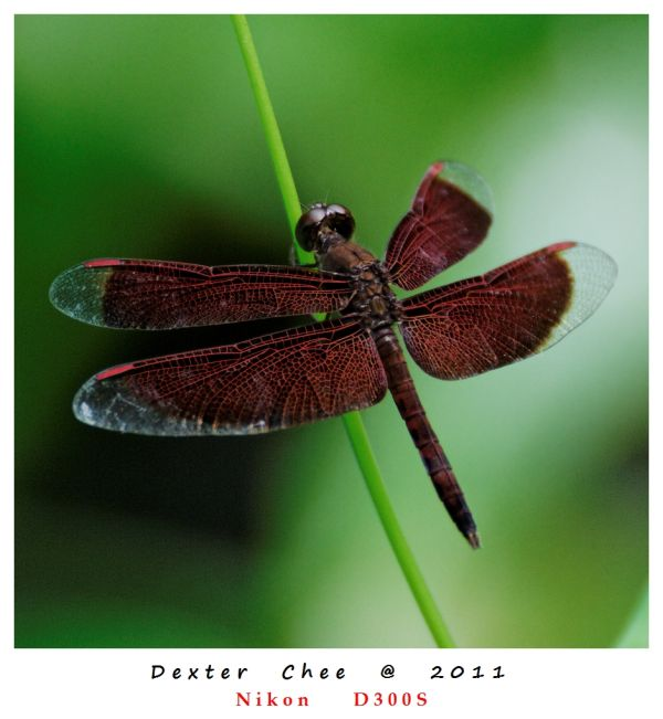 ~ Insect Series #7 ~