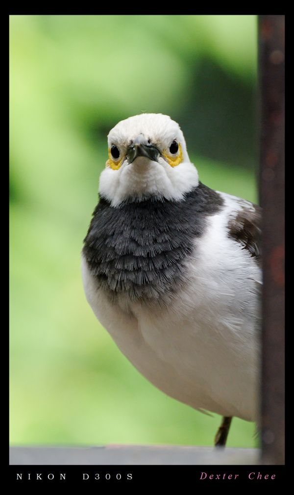 ~ Cute Little Bird ~