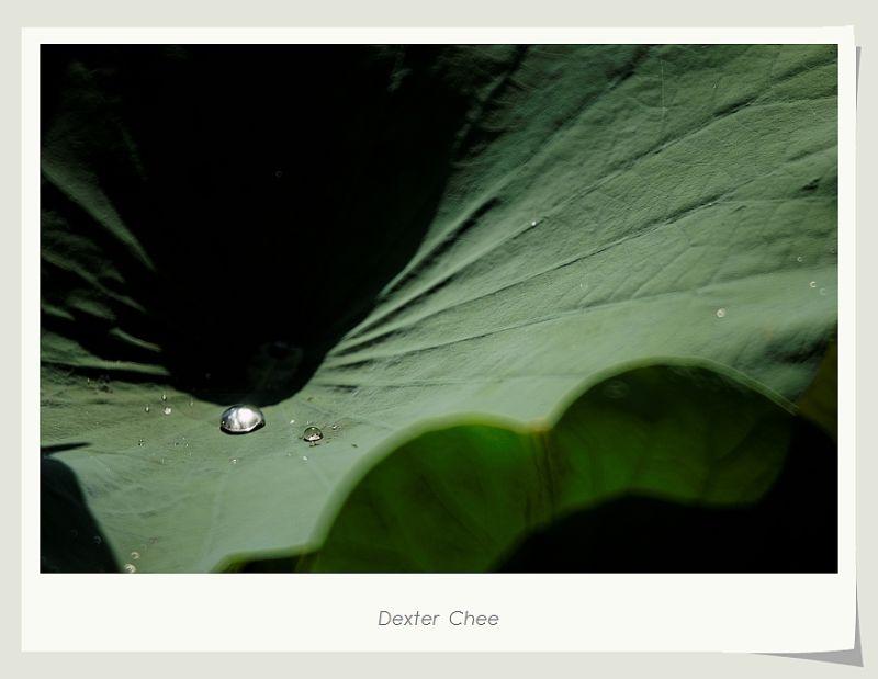 ~ I Love Lotus 爱荷 # 6 ~