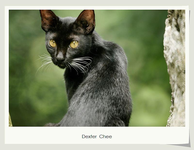 ~ Black Cat ~