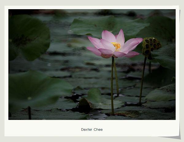 * I love Lotus - S2#2 *