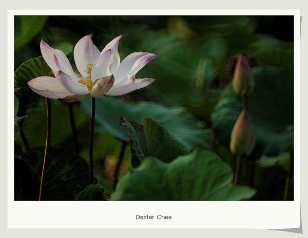 * I love Lotus - S2#3 *