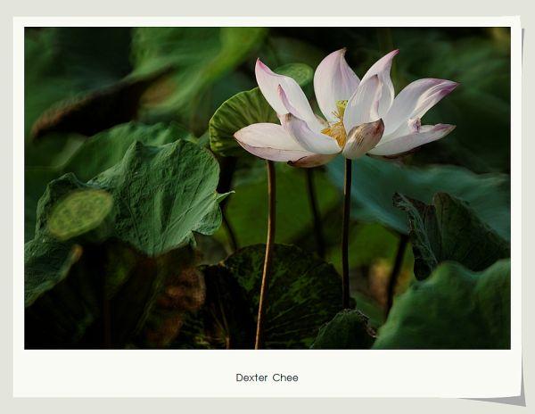 * I love Lotus - S2#4 *
