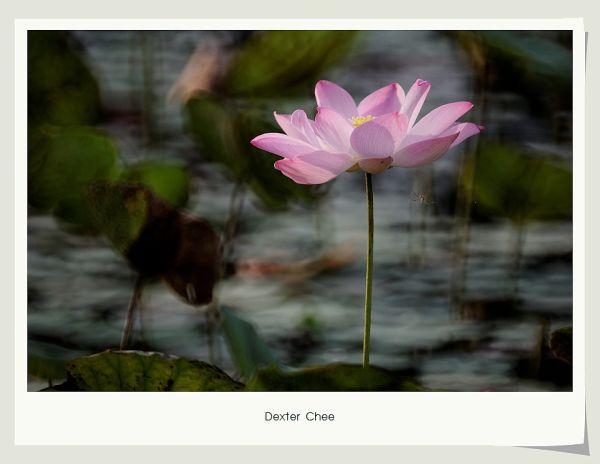 * I love Lotus - S2#5 *