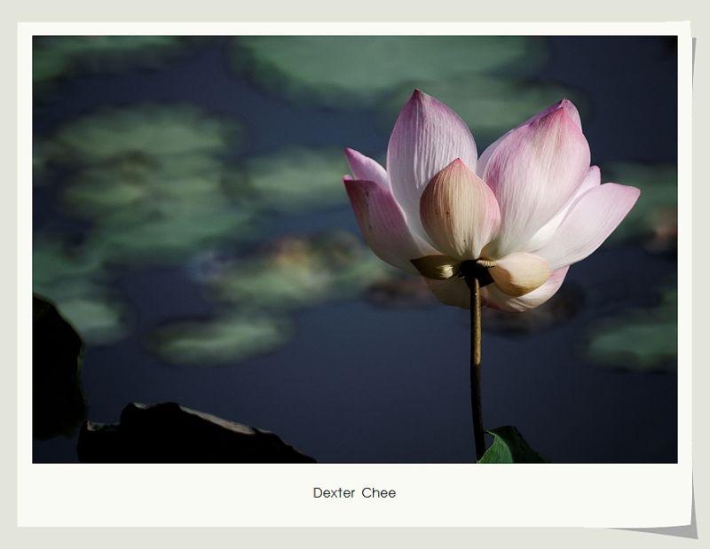 * I love Lotus - S2#8 *