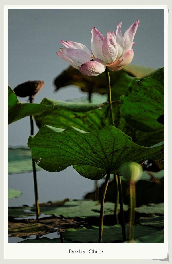 * I love Lotus - S2#10 *