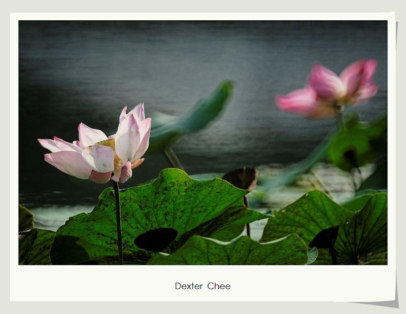 * I love Lotus - S2#13 *