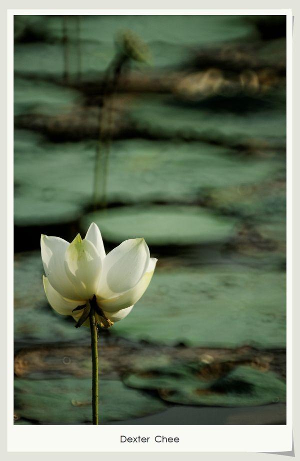* I love Lotus - S2#15 *