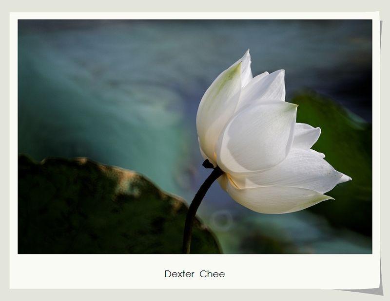 * I love Lotus - S2#16 *