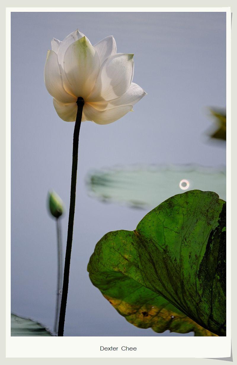 * I love Lotus - S2#19 *