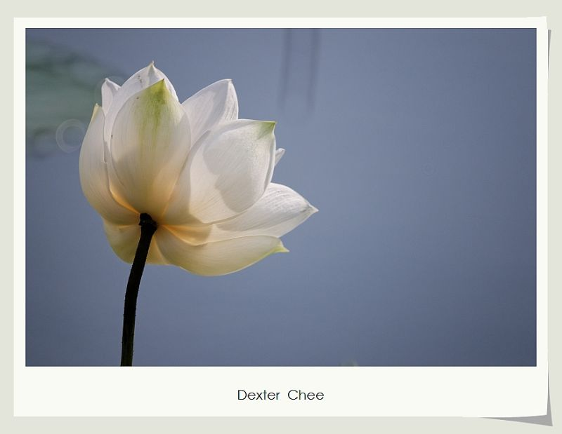 * I love Lotus - S2#21 *