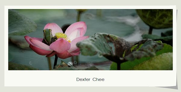 * I love Lotus - S2#22 *