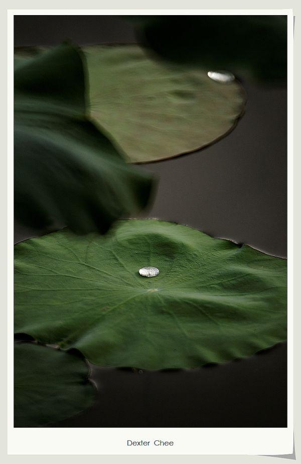 * I love Lotus - S2#32 *