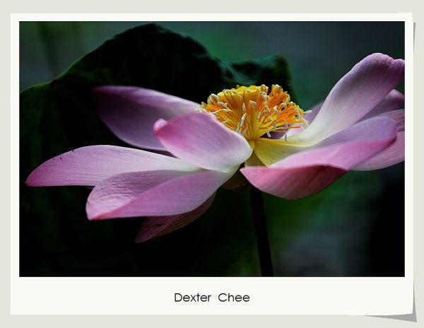 * I love Lotus - S2#35 *