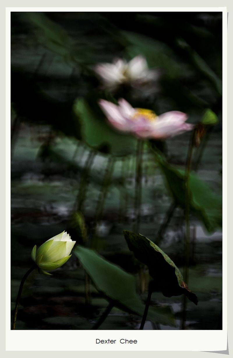 * I love Lotus - S2#39 *