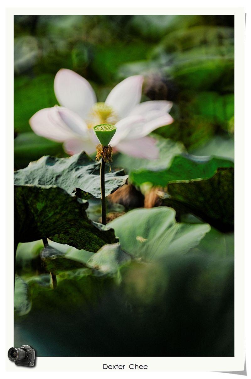 * I love Lotus - S2#44 * - I protect you.