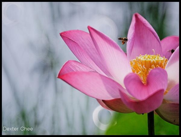* I love Lotus - S2#48 * - I'm a Bee.
