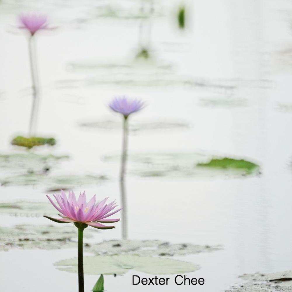 * I love Lotus - S2#60 *