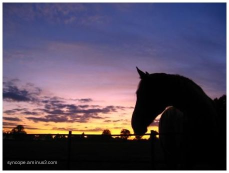 osterley horse