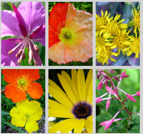 color collage of wildflowers