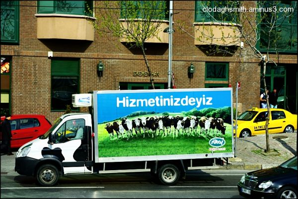 cows and truck instanbul