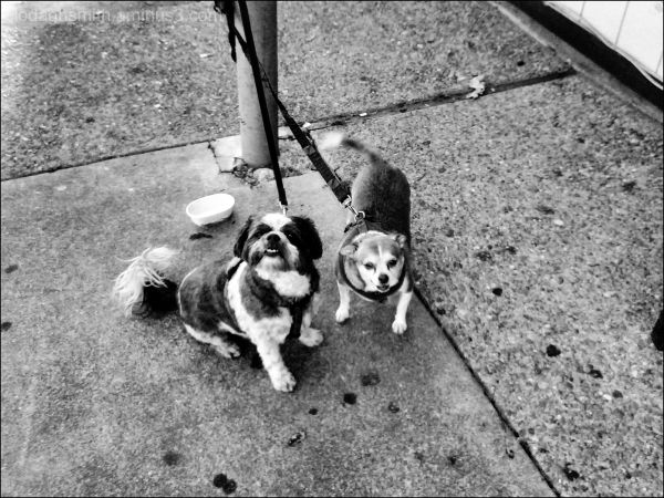 waiting dogs