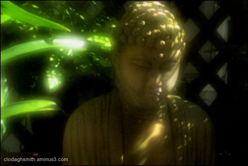 buddha out the window