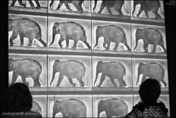 Muybridge's elephants