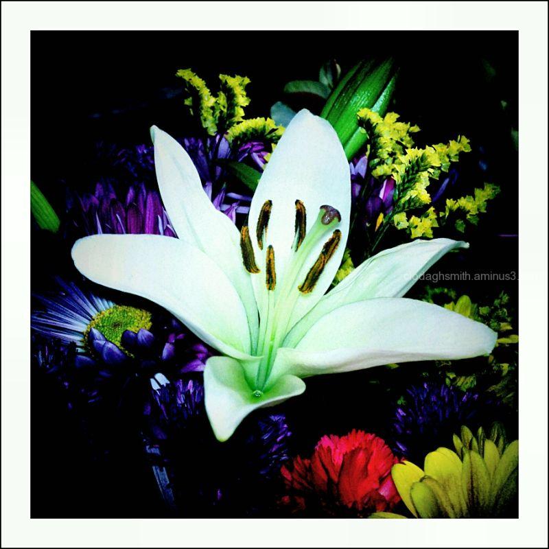 psychedelic fleurs