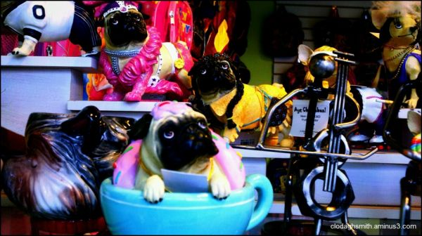 pug in a cup