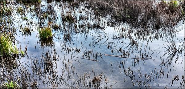 in the marsh 2