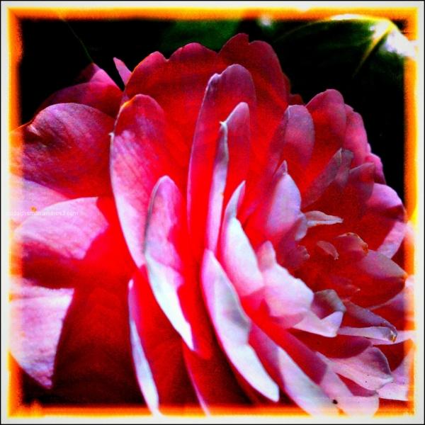 enchanted april 3